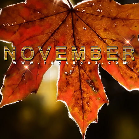 November Comments | Tagarooz.com